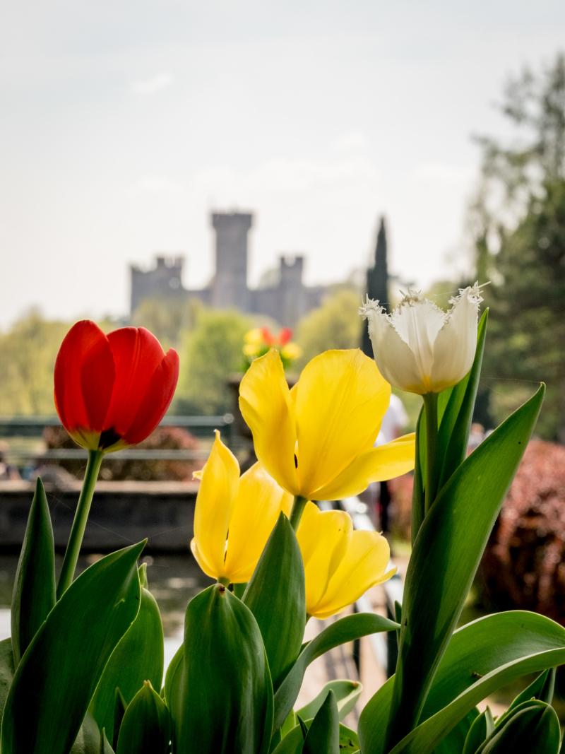 Tulipani al Parco Sigurtà, Valeggio